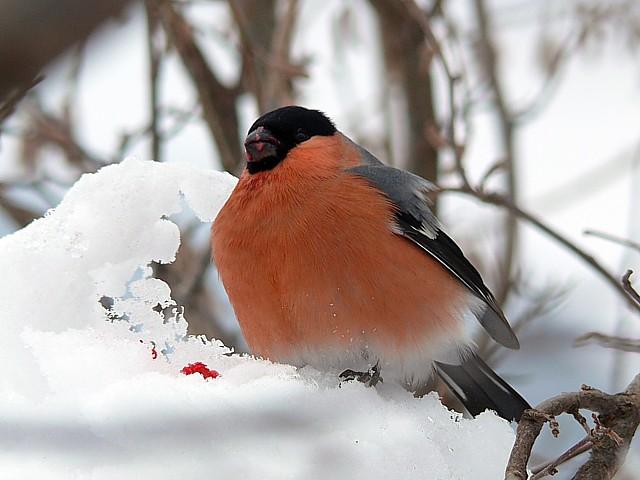 50 39 s pour toujours photos d 39 oiseaux for Oiseau domestique interieur